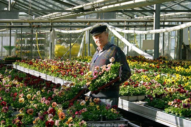 Blumen in der gärtnerei rüdiger