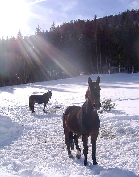 3 Pferde Aug 2003