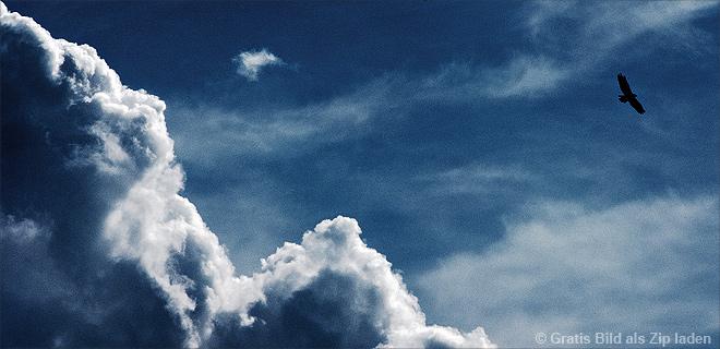 Greifvogel in den Wolken