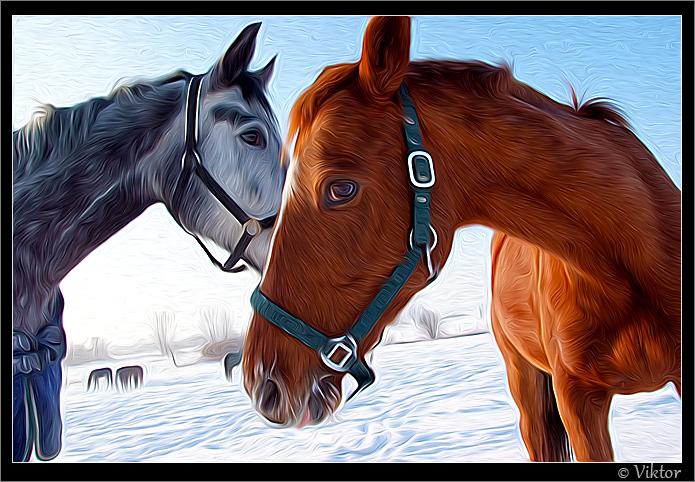 Pferde in Malchow